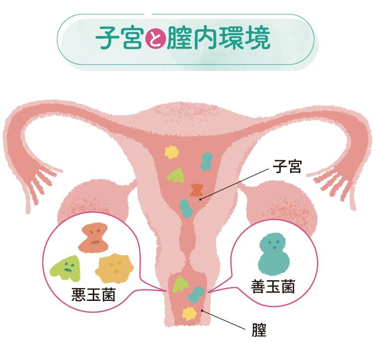 子宮と膣内環境